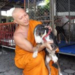 Abbot in Phayao seeks donations for animal furnace