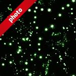 緑色のキラキラしたイルミネーションの写真加工パターン