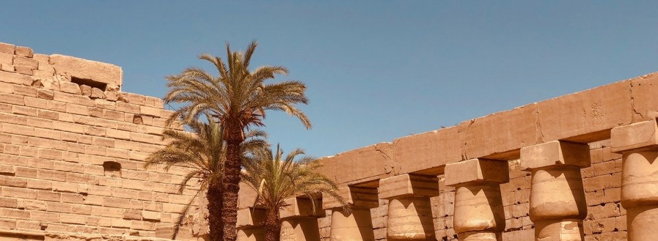 middle east palm trees