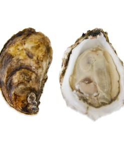 BLUE POINT OYSTERS 100 Oysters
