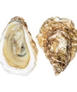 QUONSET POINT OYSTERS 100 Oysters