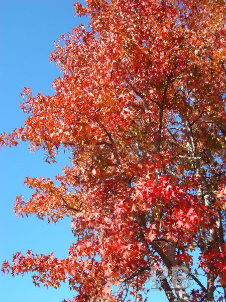 December fall tree