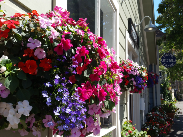 Beautiful flower baskets in Sausalito CA, photo by Patty Bennett