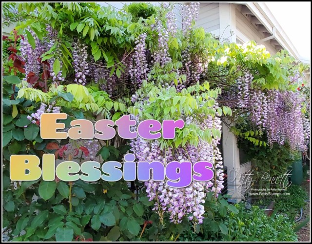 Happy Easter 2021. Wisteria from Patty's garden.