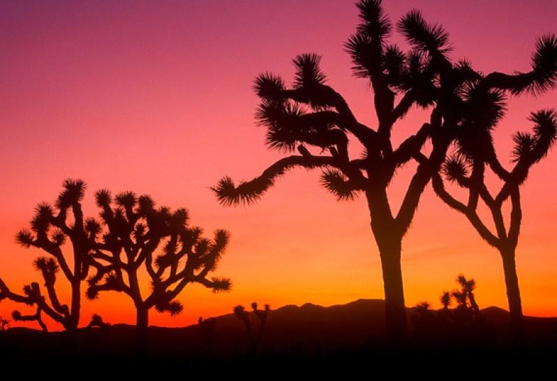 atardecer_en_el_parque_nacional_de_joshua_tree_6209_570x
