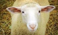 4 Ways Good Shepherds Lead Differently