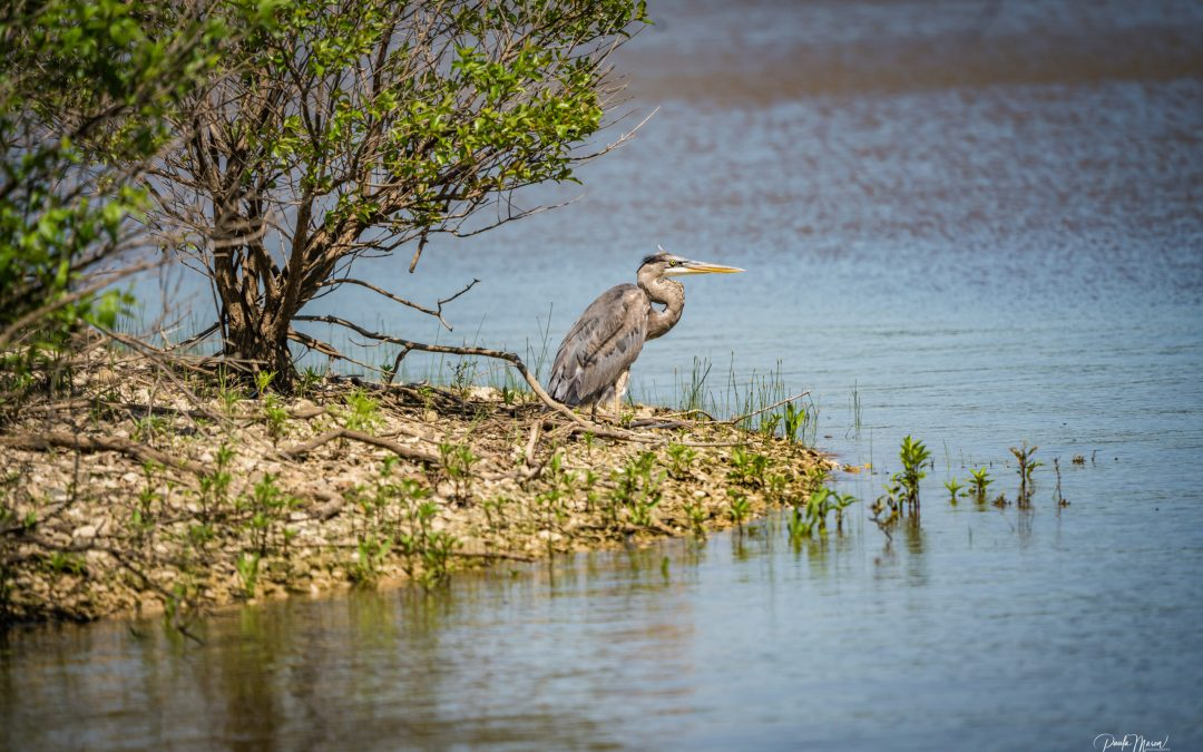 A Quick Visit to Hagerman National Wildlife Refuge