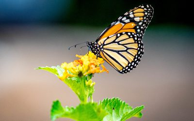 Time for a Butterfly Garden