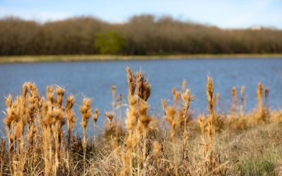 Where Should We Take Our Family Photos?  How About Oak Point Park & Nature Preserve?