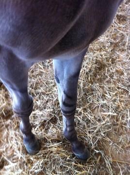 Stripey Knees