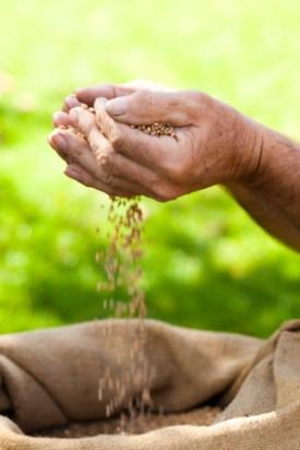 Sifting grain