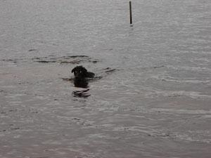 tilly simmar