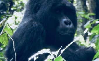 LENT: How Gorillas Humbled Me