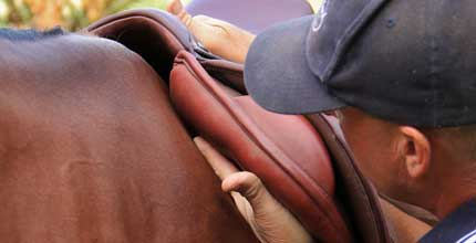 Saddle fitting conducted by Paul Buckland