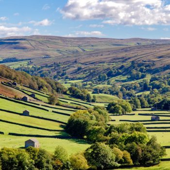 Swaledale fields