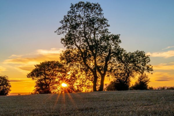 Sunsets through the trees, Morton-on-Swale