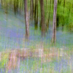 Rydal Woods using Intentional Camera Movement