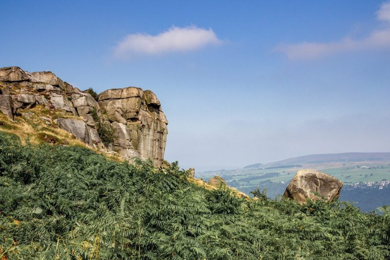 The Cow and Calf