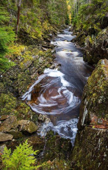 Ferns, swirls, rocks and trees