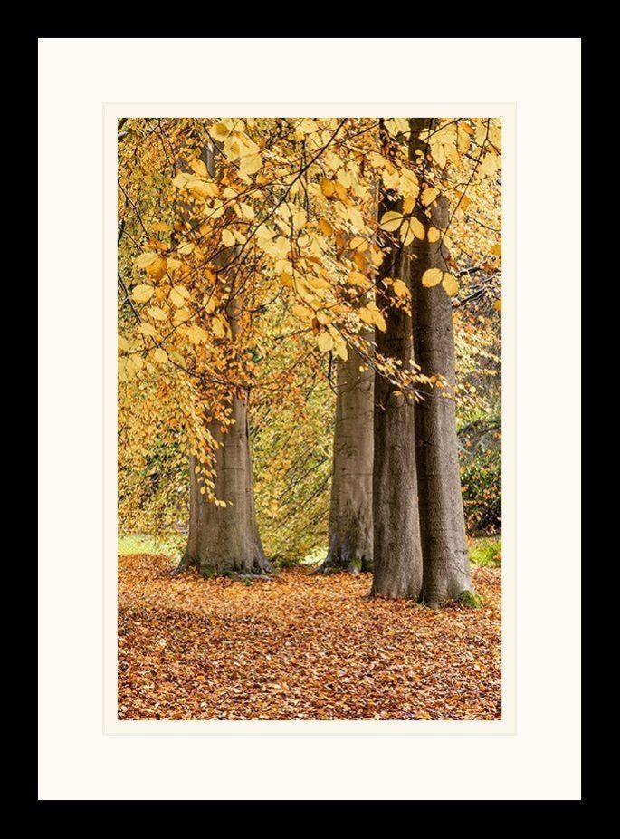 Autumn, Thorp Perrow