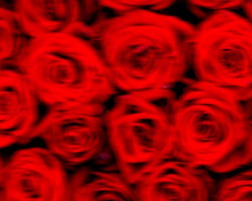 Roses (ICM)