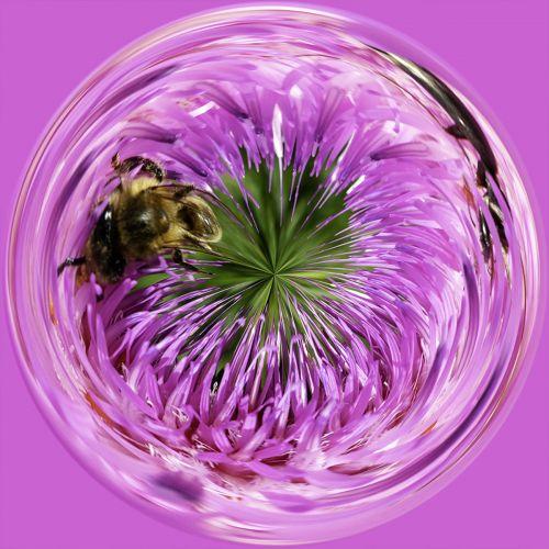 Bee on flower PSC056