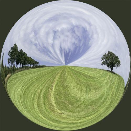 Trees in a field PSC020