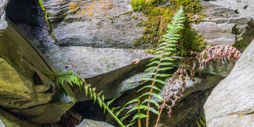 Fern in the rocks