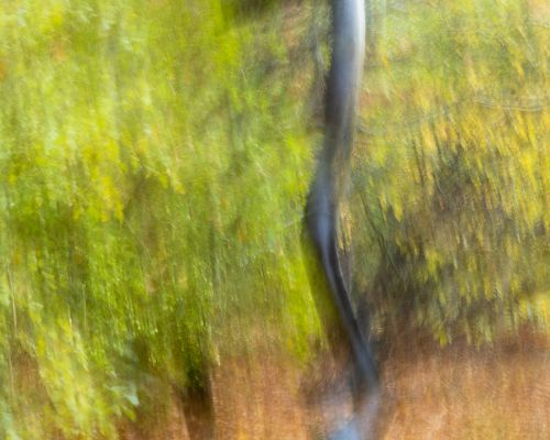 Tree trunk - Intentional Camera Movement