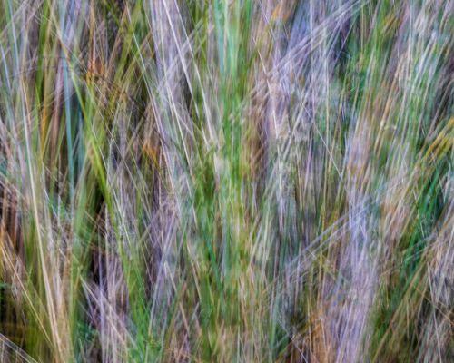 Grasses ICM