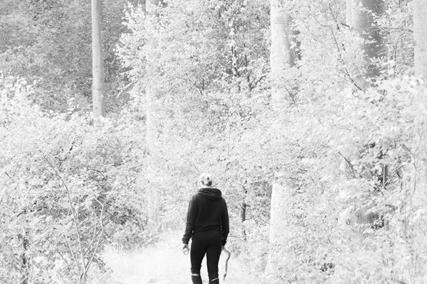 A walk in the woods 2