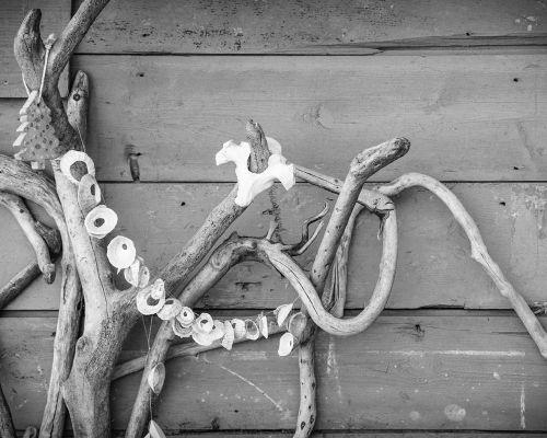 Driftwood and shells
