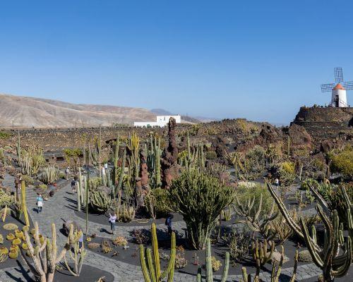 Cactus Garden Panorama