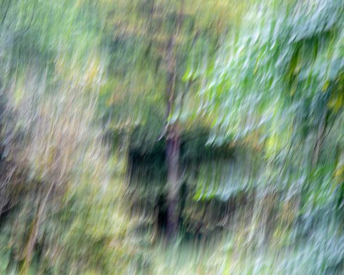 Trees at Bolton Abbey ICM