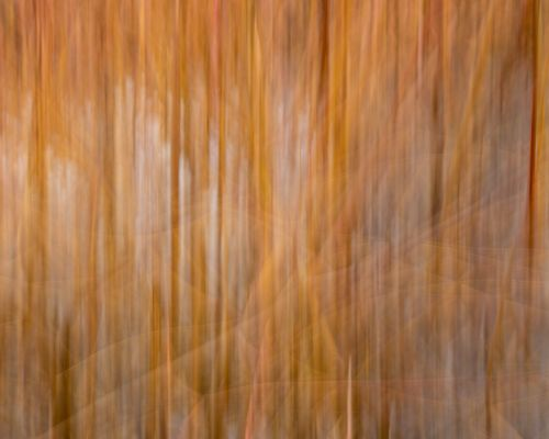 Reeds captured using ICM