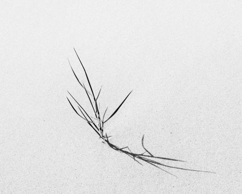 Grass in sand, Beadnell
