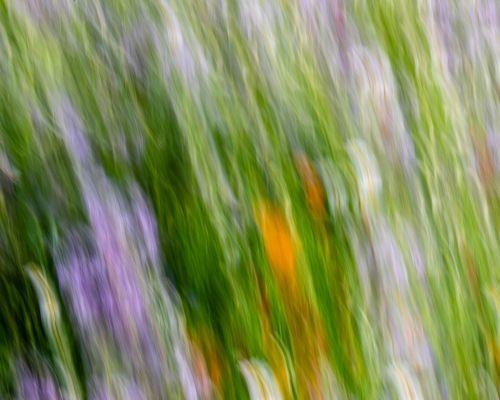Flowers in meadow, Morton-on-Swale (ICM)