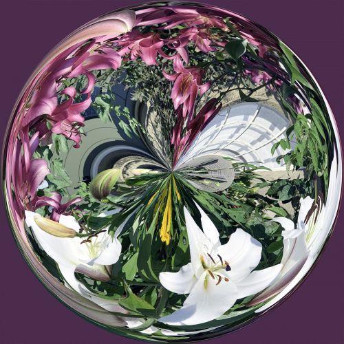 Garden Lilies PSC021