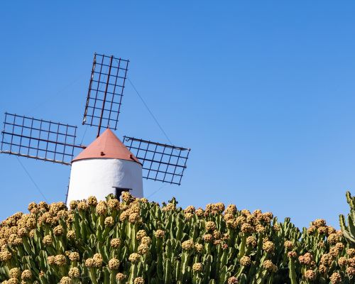 Windmill at The Cactus Garden