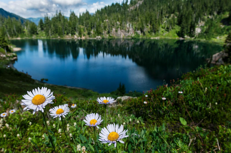 © Paul Conrad/Pablo Conrad Photography - Blue asters above Iceberg Lake along the Chain Lakes Trail. I used my 17-35 at 17 mm with an aperture of f/11. These are tiny flowers so I had to get super close. At f/11, it gave me sufficient depth of field to get the lake and surrounding mountains visible, but not overpowering. I like how they're a little out of focus.