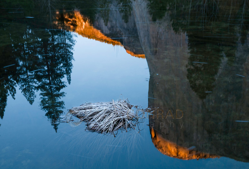 © Paul Conrad/Pablo Conrad Photography - Morning Sun lights El Capitan as it's reflected in the Merced River in Yosemite Valley in Yosemite National Park, Calif., on Thursday Mar. 5, 2015.