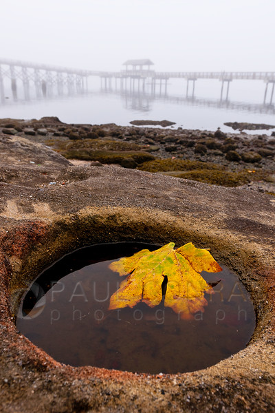 © Paul Conrad/ Pablo Conrad Photography - A leaf rests in a pool of tidewater along the shore at Boulevard Park during the morning fog in Bellngham, Wash., on Friday morning October 18, 2013.