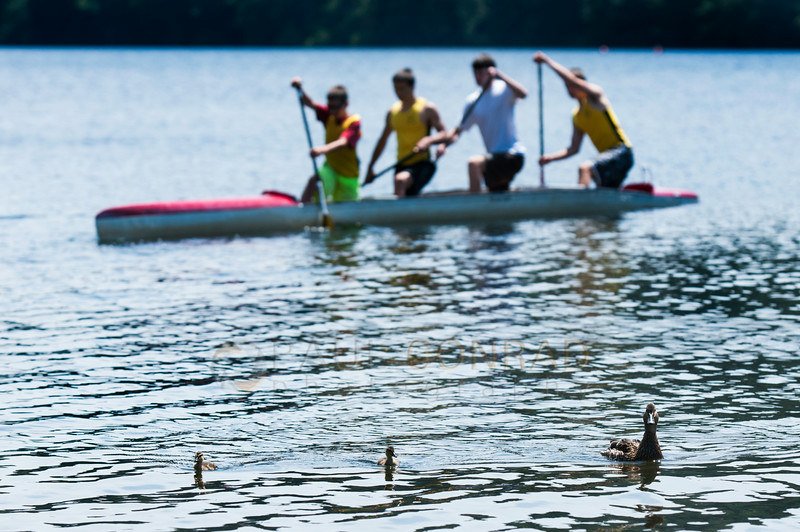© Paul Conrad/The Bellingham Herald - A mother duck and her two ducklings paddle away from competitors during the 2014 Bellingham Regatta hosted by the Bellingham Canoe & Kayak Sprint Team on Lake Padden on Saturday  morning June 14, 2014, in Bellingham, Wash.