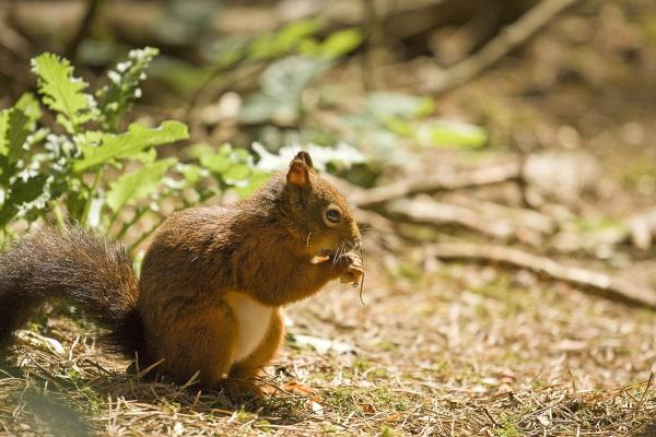 Red Squirrel at Formby Colour Landscape Photograph Landscapes Photography British Countryside