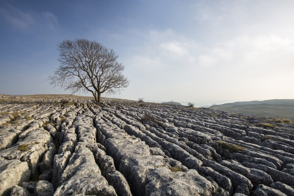 'A Yorkshire Summer' The Tree at Malham Yorkshire Landscapes Clouds