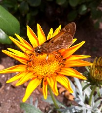 iPhone 4 macro photos of butterfly on flower today in front yard