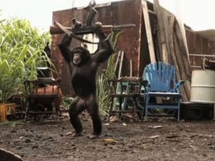 Video: Never give a Monkey a Machine Gun: Ape With AK-47