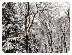 Snowy day view in our backyard this morning