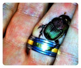Daniel's Big June Bug (in May) http://t.co/M6t575HE