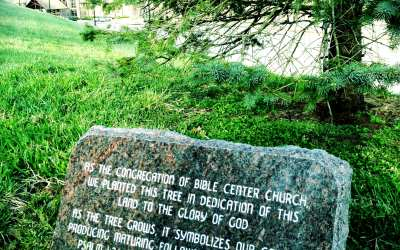 Bible Center Tree Planted in 2004 has Grown!